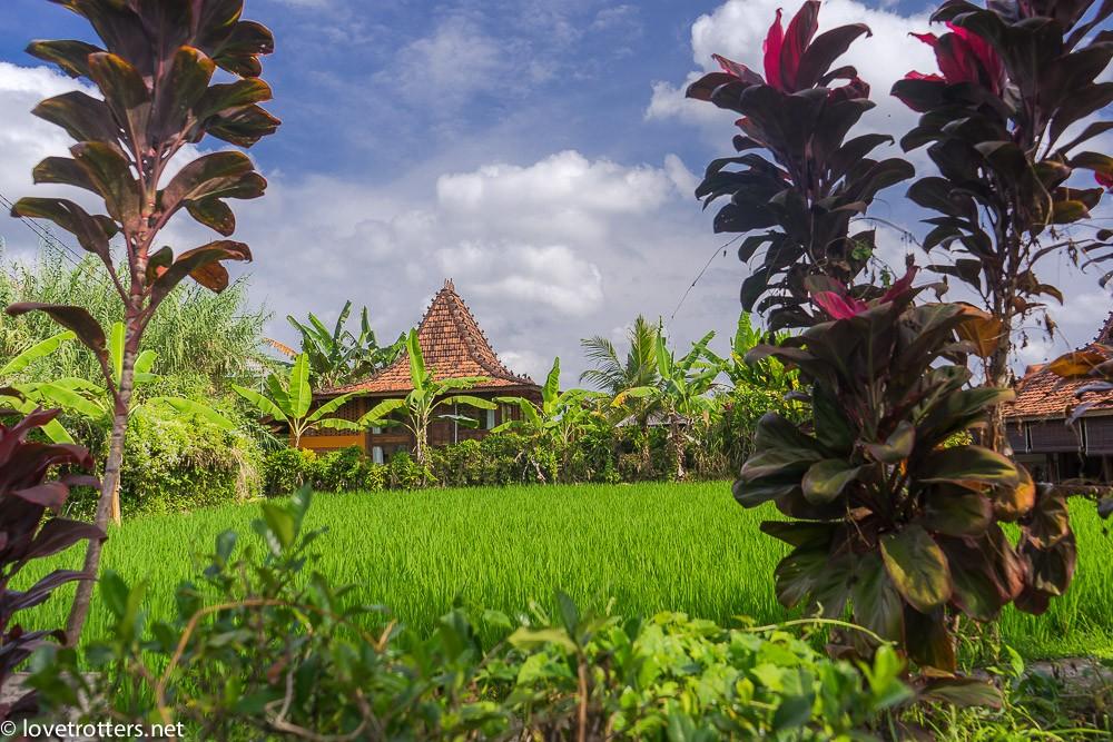 indonésie-bali-ubud-09469