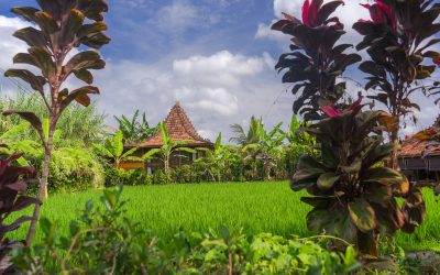 Eat Pray Love & Sleep à Ubud: Le guide ultime de la vie à Ubud