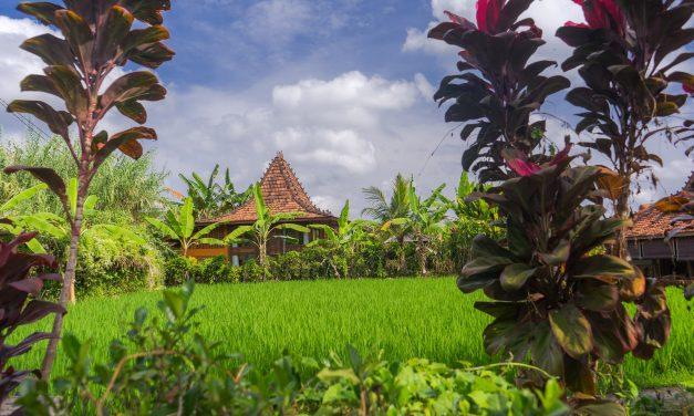 Eat Pray Love & Sleep à Ubud: Le guide ultime de la vie à Ubud
