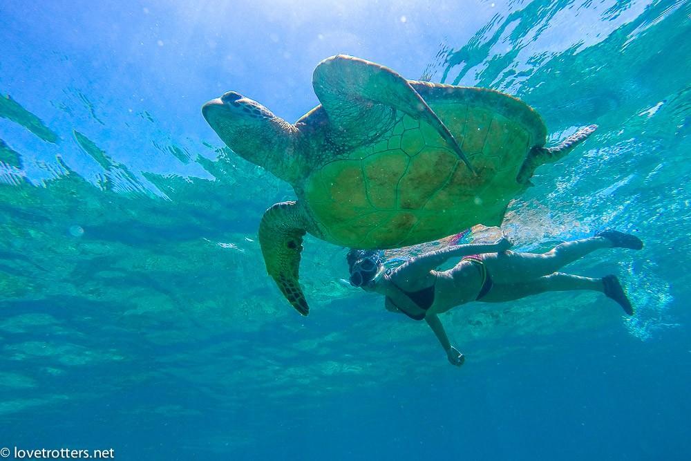 philippines-apo-island-snorkeling-turtles-0044000