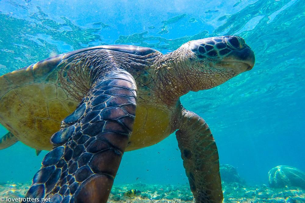 philippines-apo-island-snorkeling-turtles-0054076