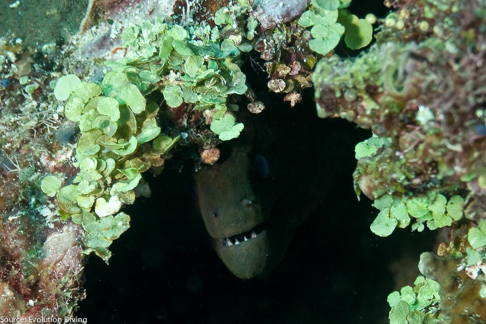philippines-malapascua-diving-