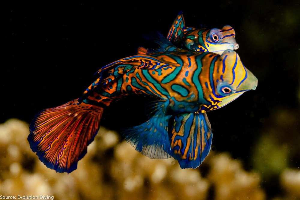 philippines-malapascua-diving--3