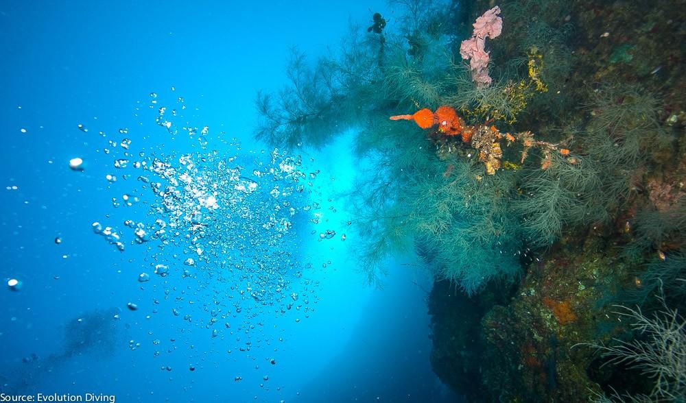 philippines-malapascua-diving--9