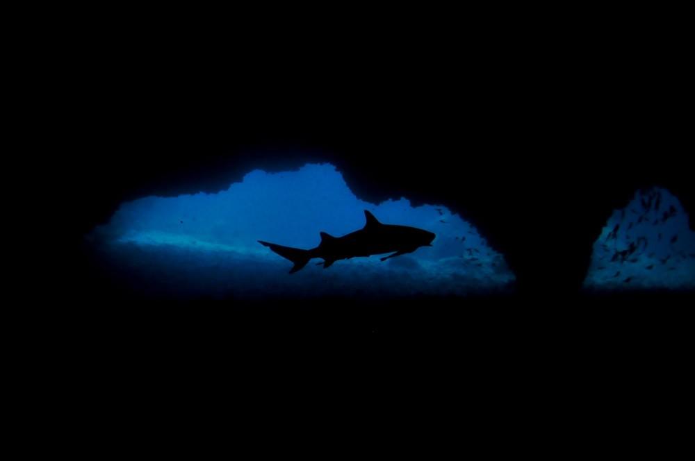 philippines-malapascua-diving-shark-gato-cave-