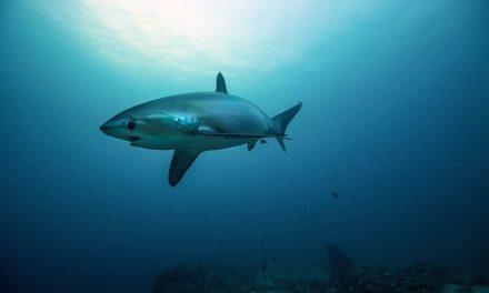 Plonger aux Philippines: Notre top 5 des meilleurs spots de plongée