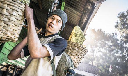Le volcan Kawah Ijen à Java: Ses surhommes et ses mystérieuses flammes bleus