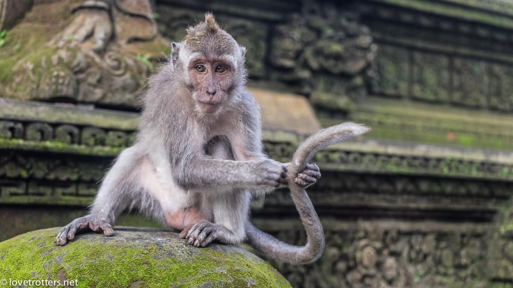 indonésie-monkey-temple-lovetrotters-07947