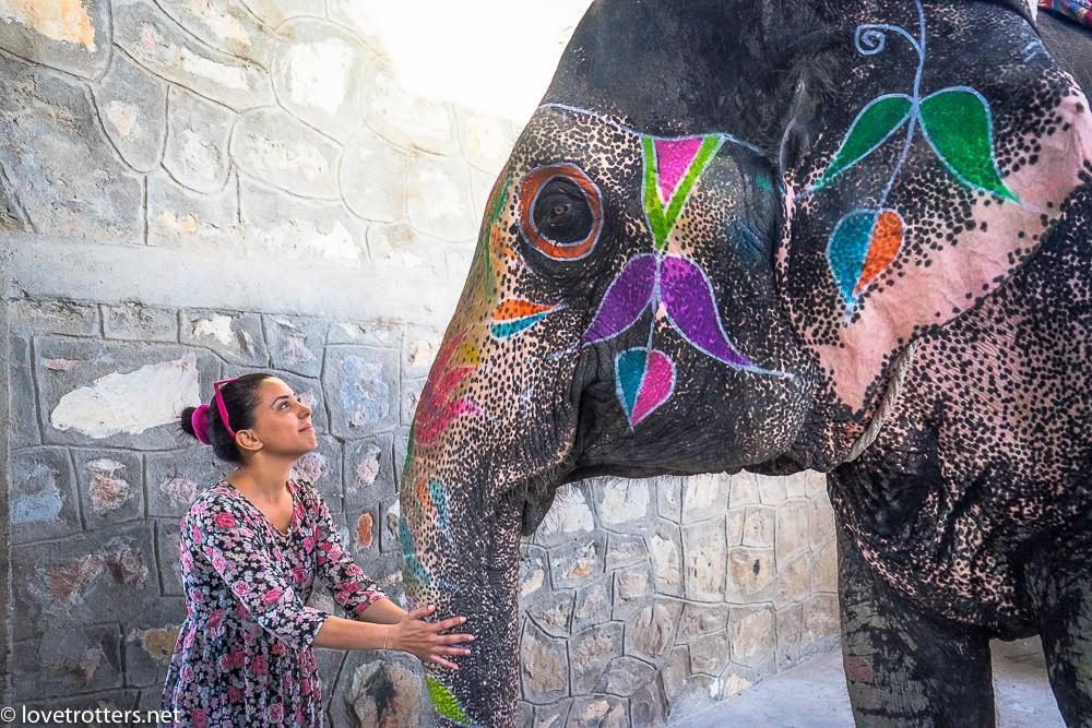 inde-jaipur-holi-elephant-09801