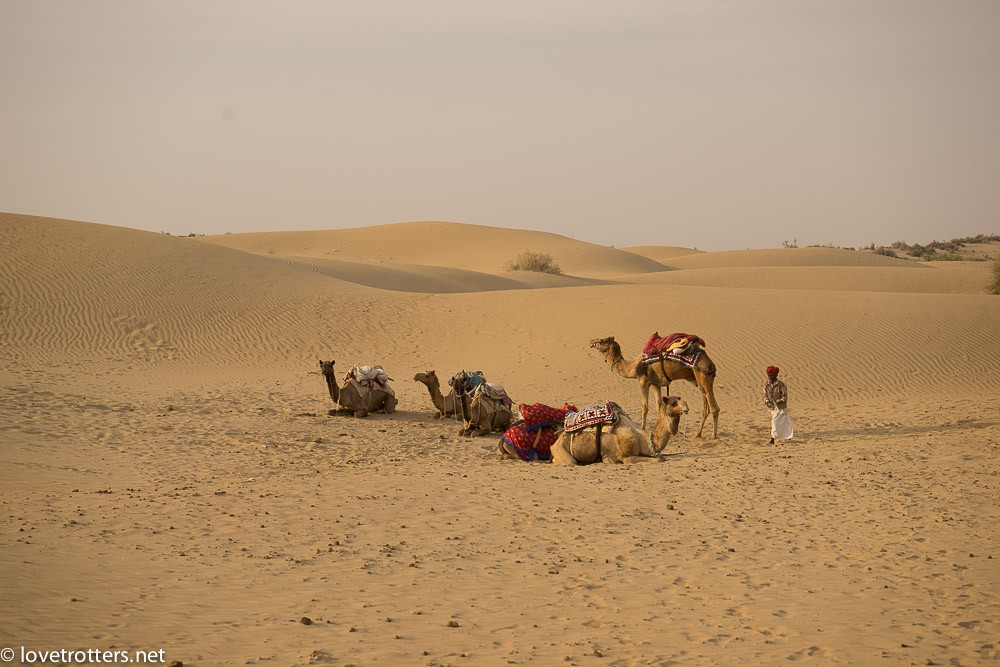 india-jaisalmer-camel-safari-00327