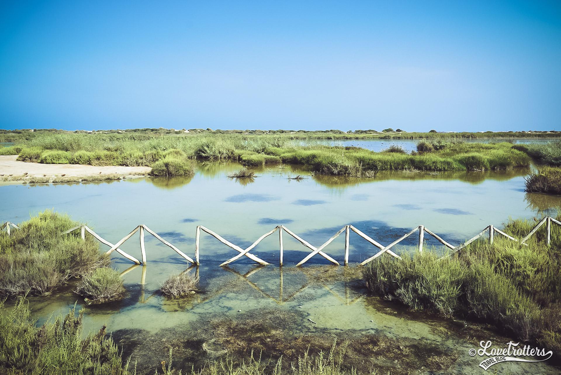 Aire protégée de l'embouchure de la Moulouya à Saidia