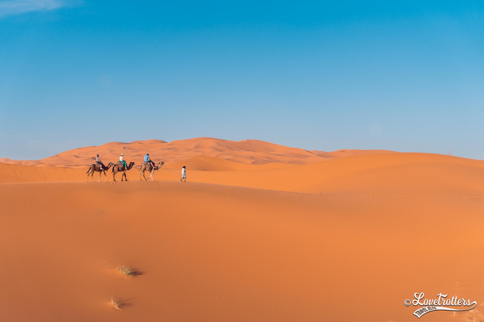 Caravane de dromadaires dans le désert de Merzouga