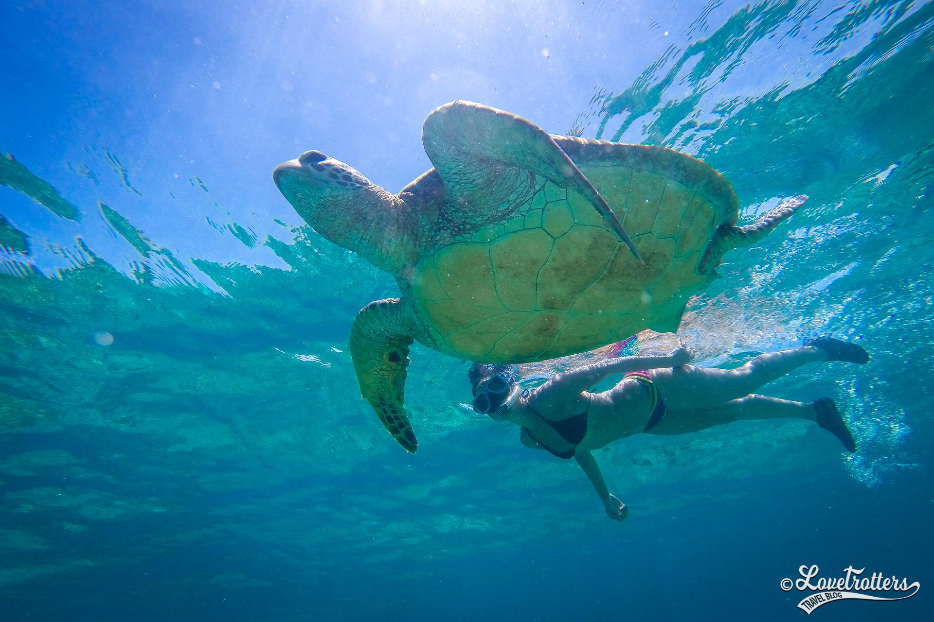 Snorkeling avec les tortues d'Apo Island lors d'un voyage aux Philippines