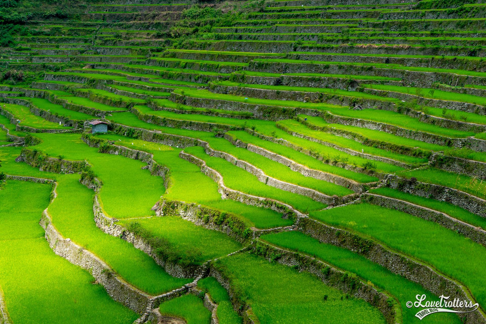 Voyage au Philippines - les terasses de riz de Batad
