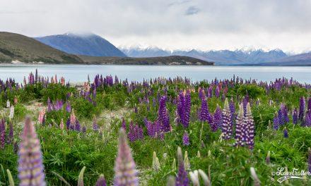 Voyage en Nouvelle-Zélande en 20 photos top chrono