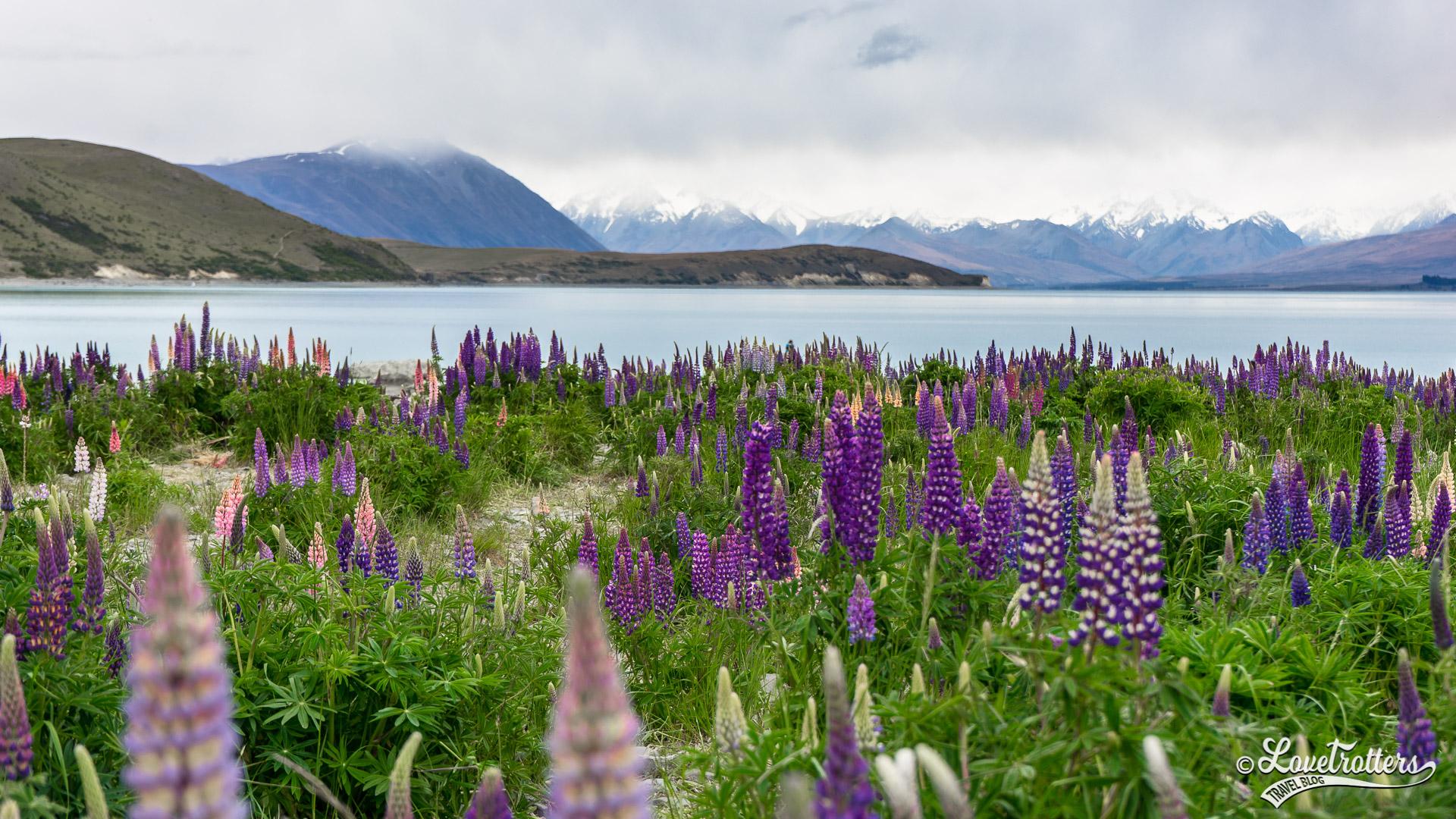 Voyage en amoureux en nouvelle-zélande