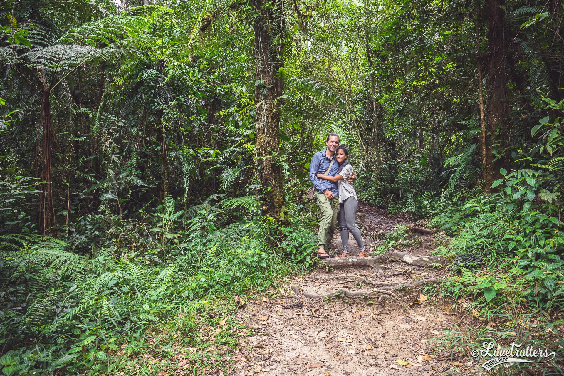 Randonnée dans la forêt aux Cameron Highlands