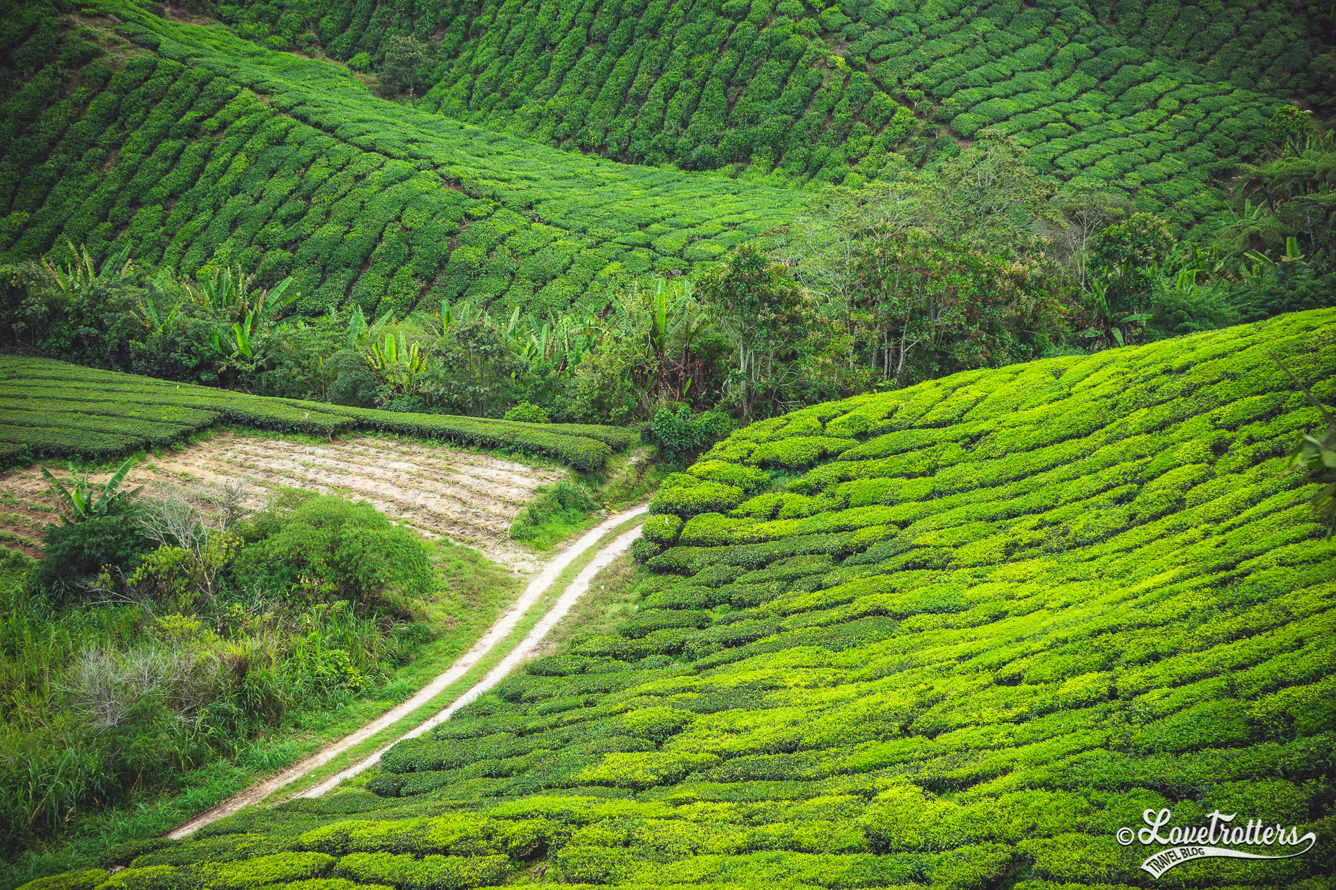Les plantations de thé des Cameron Highlands