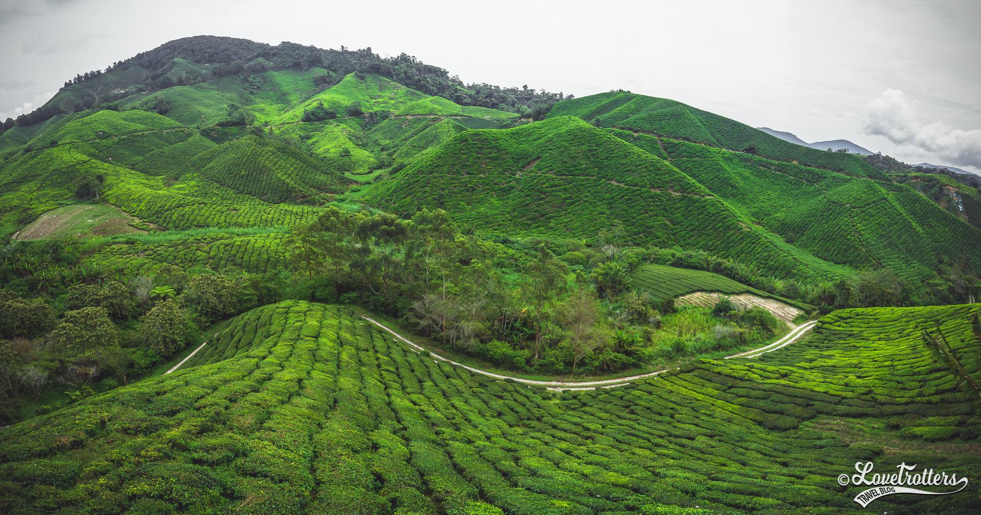 Vue panoramique sur les plantations de thé des Cameron Highlands en Malaisie